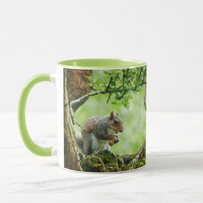 A squirrel sitting on a branch. mug