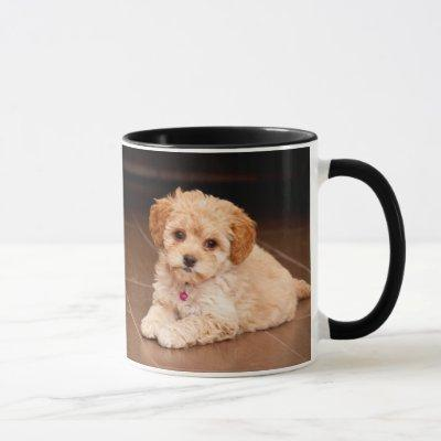 Baby Maltese poodle mix or maltipoo puppy dog Mug