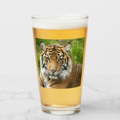 Big Cat Sumatran Tiger Photo Glass