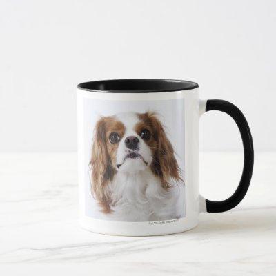 Cavalier King Charles Spaniel sitting in studio Mug