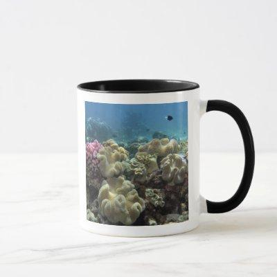 Coral, Agincourt Reef, Great Barrier Reef, Mug
