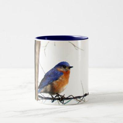 Eastern Bluebird Photo Two-Tone Coffee Mug