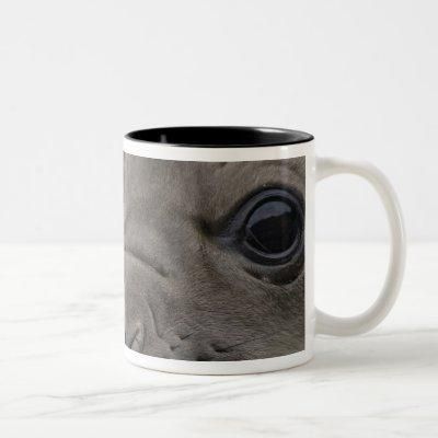 Elephant seal Mirounga leonina) cub in the Two-Tone Coffee Mug