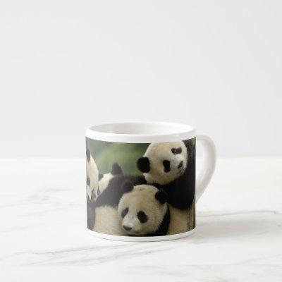 Giant panda babies Ailuropoda melanoleuca) 4 Espresso Cup