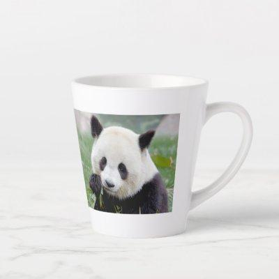 latte mug Photo giant panda , animals . latte mug