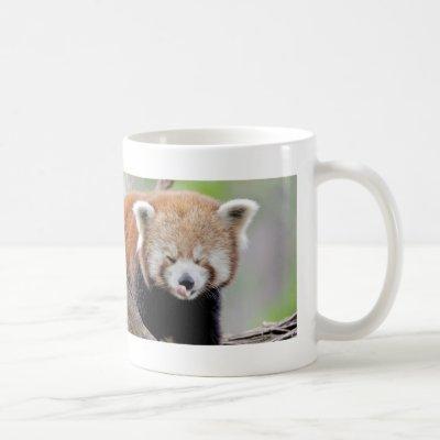 Mug Photo red panda , animals 0399.