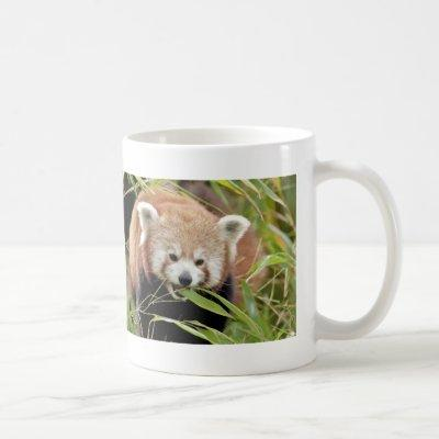 Photo red panda , animals 0397. coffee mug