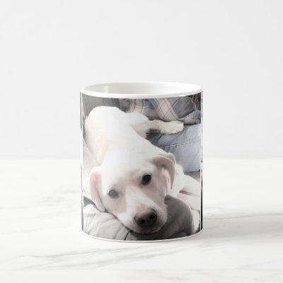 Photos of Cute White Dog Hanging Out With Dad Coff Coffee Mug